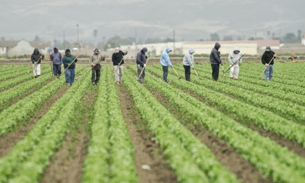 Labor Trafficking Preys on the Undocumented