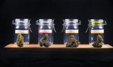 Medical Marijuana or Opioids?